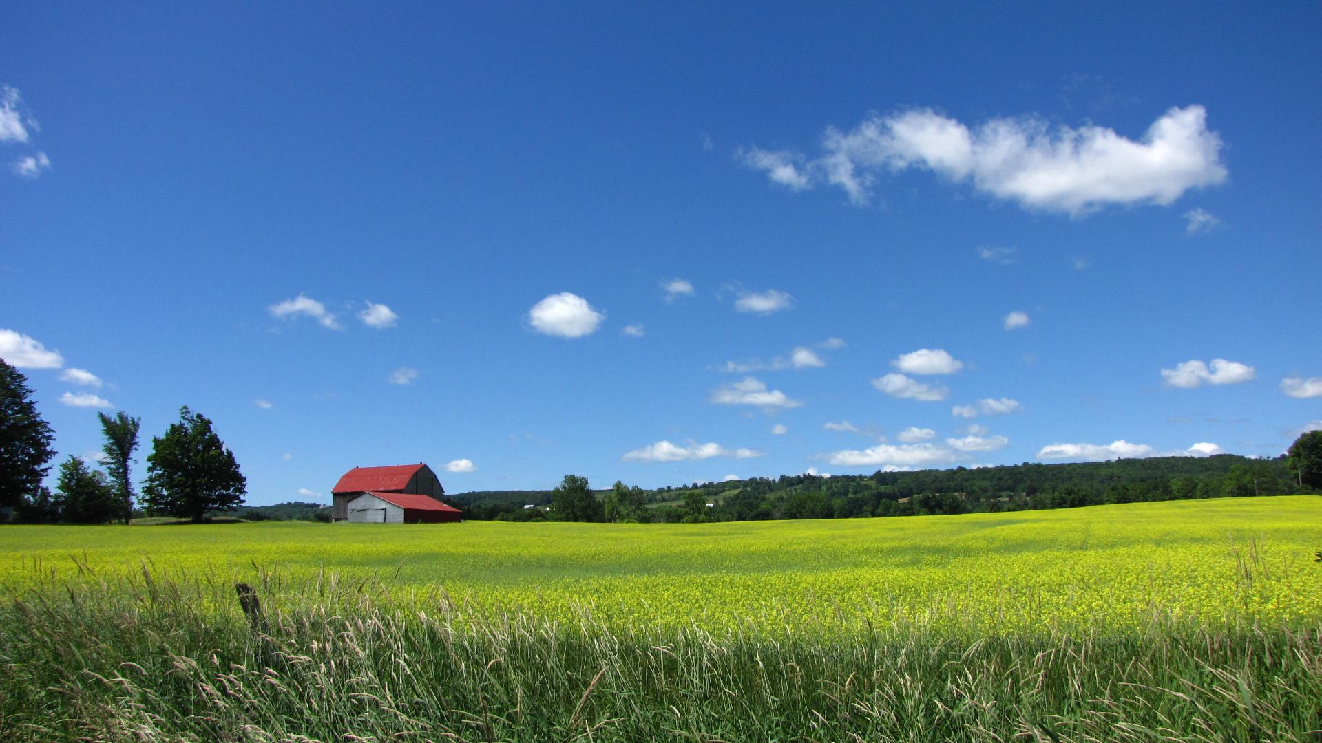 Barn across the field