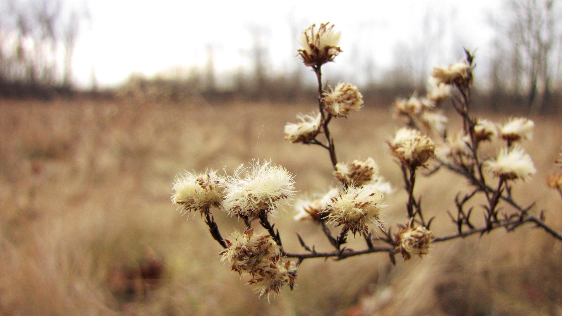 winter-weeds